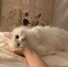 Cute Kittens, Cute Baby Cats, Cute Little Animals, Baby Animals, Cats And Kittens, Cute Dogs, I Love Cats, Crazy Cats, Cool Cats