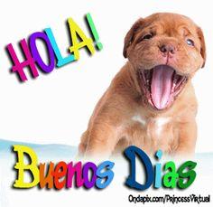 Hola Buenos dias!!! #animales #buenos dias