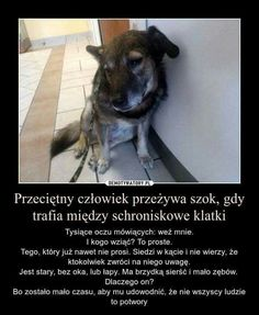 Daily Quotes, Life Quotes, Funny Animals, Cute Animals, Important Quotes, True Stories, Pet Adoption, Sad, Humor