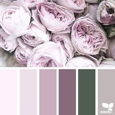 jessica colaluca (@designseeds) • Instagram photos and videos ❤ liked on Polyvore featuring backgrounds and filler