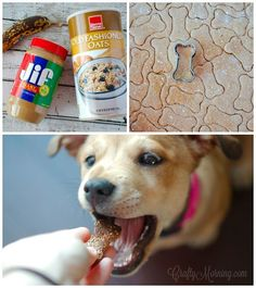 Buying treats at the pet store is never cheap and who knows what some of the things they use! Make them at home with just 3 ingredients you probably already have. Your dogswill LOVE these!!  Ingredients: 1 1/2 cups Oatmeal 1/2 cup peanut butter 1 ripe banana Directions: Preheat oven to 350. Process the …