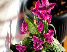 http://jschillingphoto.de/ flower, winter, pink