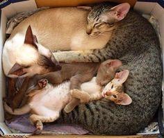 Somos uma família unida, nunca viu uma assim, dormindo juntinhos.