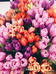 ideas for flowers tulips quotes Flowers In Hair, Fresh Flowers, Spring Flowers, Beautiful Flowers, Wedding Flowers, Tulips Flowers, Top Imagem, No Rain, Flower Aesthetic