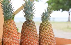 The sweetest #pineapples in the world come from #Antigua!  | photo via @InsideTravelLab