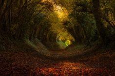 い行ってみたーい!!!  :こんなところを毎日歩けたらいいのに…!おとぎ話に出てきそうな「樹木のトンネル」写真をピックアップしてみたよ♪