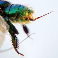 Parasites Friendly Stink Bugzz Educational