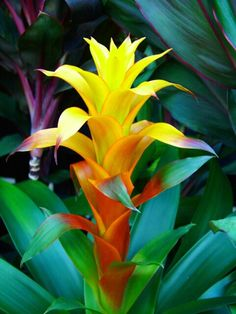 Indoor plant - Bromeliad- I NEED one of these for my house!