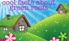 Benefits of a Living Green Roof on Your Home!