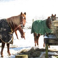 What do you do to prepare your horse's hooves for winter? We do not ride as much in the winter, our horses do not get as much exercise and if they are out in the pasture, the cold weather means less movement. This does not mean that your horse's hooves should be ignored!