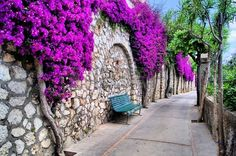Capri, Italy  I have walked along this path. It's a beautiful site.