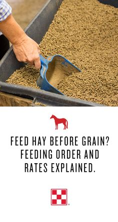 As we move from fall to winter and feeding schedules change, feeding order, time of day and feeding rates are still important for your horse's health. Ph.D. Equine Nutritionists Mary Beth Gordon, Karen Davison and Mike Jerina address the impact of these factors on your horse's health.