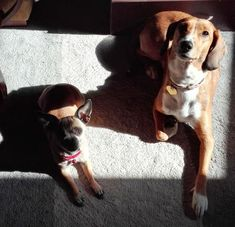 Συνταγή με αντικαρκινικές ιδιότητες για σκύλους-Τα ΣκυλοΝέα Της Μάρσας