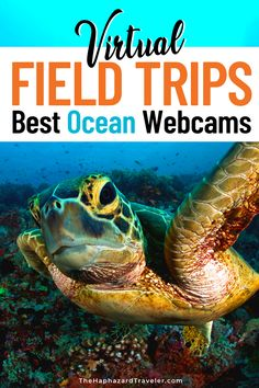 Looking for virtual field trips & ways to keep young minds busy? Take a virtual aquarium tour with these ocean webcams & live feeds! These are the best educational virtual field trips for kids, homeschooling & teacher resources. See jellyfish & sea otters at the Monterey Bay Aquarium, penguins at the Aquarium of the Pacific, manatees & corals in Florida, a kelp forest in California, Beluga whales in Manitoba, whale sharks in the Georgia Aquarium #onlinelearning #homeschool… Travel With Kids, Family Travel, Virtual Museum Tours, Virtual Tour, Georgia Aquarium, Virtual Travel, Virtual Field Trips, Ways To Travel, Travel Tips