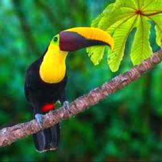 In Costa Rica.....