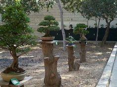 Repurposed stumps/trunk for monkey poles!