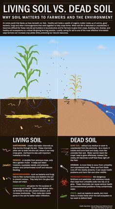 Building a drought-proof farm: make sure that the soil is alive.