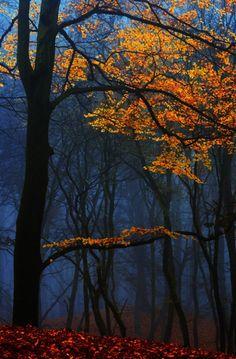 Blue Autumn | Lars van de Goor