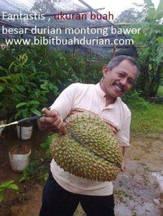 Budidayanya Durian Tree, Modern Luxury Bedroom, Plantar, Fruit Trees, Food And Drink, Vegetables, Nature, Keto, Flowers