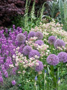 A harmonious mix of columbines, foxgloves, alliums and perennial wallflowers lends a cottage-garden style to the landscape. Purple Garden, Colorful Garden, Violet Garden, Back Gardens, Outdoor Gardens, Beautiful Gardens, Beautiful Flowers, Garden Cottage, Prairie Garden