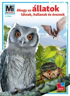 Fantasy Books, Halle, Band, Owl, Manfred, Animals, Sash, Animales, Animaux
