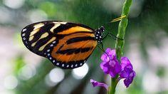 butterfly in the rain [oc][1024x576]