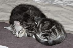 Taloni Maalla: Pipuri ja Pekka! Lifestyle, Cats, Animals, Gatos, Kitty Cats, Animaux, Animal, Cat, Animales