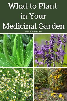 When you have a medicinal garden, you can grow healing plants and herbs to help you with various ailments. The right herbs can relieve upset stomachs, reduce cramps, treat nausea, relieve… More Sustainable Gardening, Organic Gardening, Vegetable Gardening, Gardening For Beginners, Gardening Tips, Easy Garden, Garden Ideas, How To Relieve Migraines, Herbs For Health