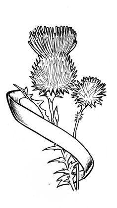 scottish thistle tattoo - Google Search