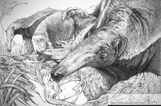 2012 SOKI 공모전출품작10-Myrmecophaga tridactyla 큰 개미핥기