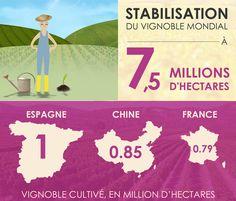 Superficie du vignoble mondiale 2016