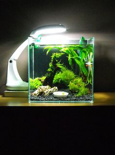 Beautiful shrimp nano with a desk lamp by deleted_user_17 from plantedtank.net