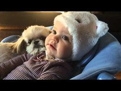 Shih Tzu is always by baby's side (VIDEO) » DogHeirs | Where Dogs Are Family « Keywords: Shih Tzu, Baby