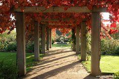 Robert Boyle Landscaping - Merricks North 2