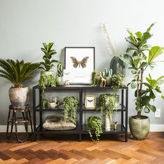 These houseplants are amazing! 🤗 📷 by Everydeco Share yours with These houseplants are amazing! 🤗 📷 by Everydeco Share yours with 💚 Room With Plants, House Plants Decor, Plant Rooms, Potted Plants, Indoor Plants, Decoration Plante, Plant Shelves, Plant Wall, My New Room