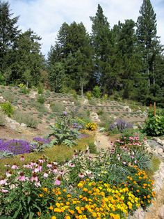 This permiculture landscape incorporates perennial food crops like artichokes and herbs with wildlife food sources like these perennial flowers in the planting design.