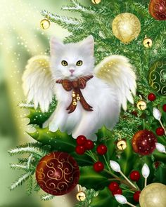CHRISTMAS CAT ANGEL  For more Christmas cats, visit https://www.facebook.com/funholidaycats