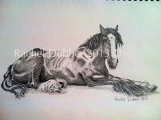 Show Jumping, Cob, Horse Riding, Irish, Horses, Facebook, Prints, Accessories, Irish People
