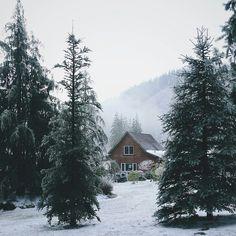 #casanafloresta #cabininthewoods #inverno #winter #clãdafloresta