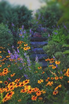 Ladybells and Black-Eyed Susans Tumble Down the Misty, Secret Garden Stairs