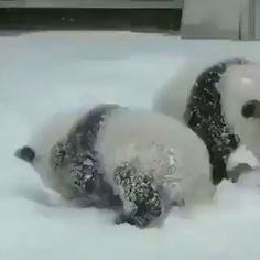 'Epic Panda with hammer' by Rhoar Cute Panda Baby, Baby Panda Bears, Baby Animals Super Cute, Cute Wild Animals, Cute Little Animals, Cute Funny Animals, Animals Beautiful, Baby Pandas, Beautiful Images