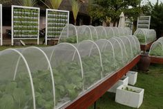best plants for hydroponics