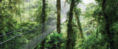 My Eat Pray Love moments in Costa Rica included trekking through the rain forest all by myself. Done