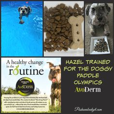 How Hazel Discovered  AvoDerm Natural Pet Food #ad @avodermnatural…