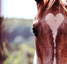 Equine Love More You are in the right place about Amazing animals photography Here we offer you the most beautiful pictures about the Amazing animals you are looking for. When you examine the Equine Love All The Pretty Horses, Beautiful Horses, Animals Beautiful, Amazing Animals, Cute Animals, Cavalo Wallpaper, Heart In Nature, I Love Heart, Tier Fotos