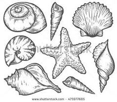 Image result for sea shell line drawing