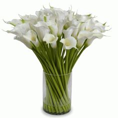 This plush beautiful Flower  arrangement  For Bahrain of tall white Calla Lily flowers are grouped in a dramatic bouquet of fifty-four stems.