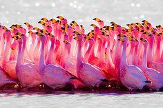 Love love flamingos!