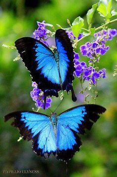 Butterflies via Carol's Country Sunshine on Facebook