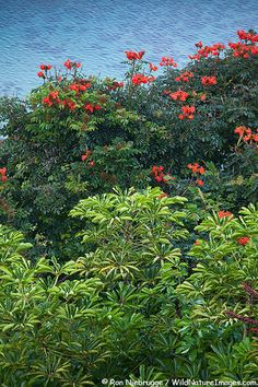 Princeville Coast, Kauai, Hawaii